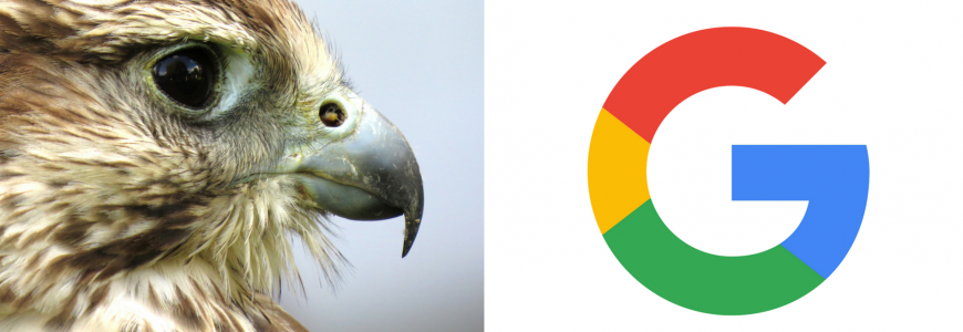 Google Hawk Update